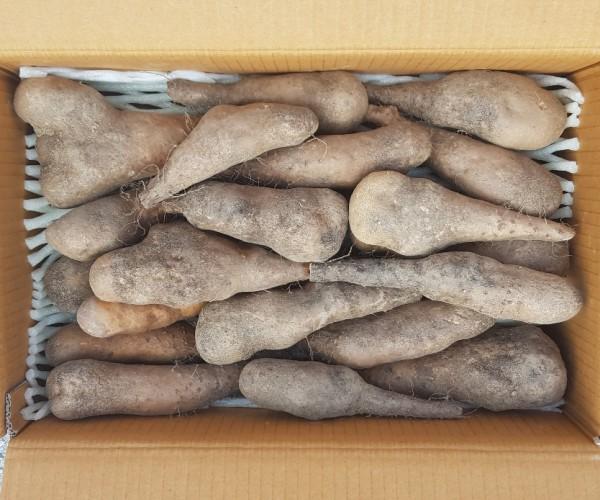 안동에서 생산된 건강한 안동마 산약 참마 산마(생마5kg)